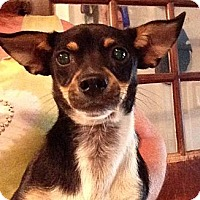 Adopt A Pet :: Poncho - Dundee, FL