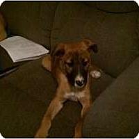 Adopt A Pet :: Hank - Fresno, CA