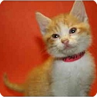 Adopt A Pet :: KATHLEEN - SILVER SPRING, MD