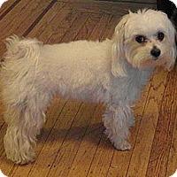 Adopt A Pet :: Reggie - Hamilton, ON