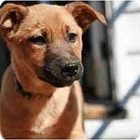 Adopt A Pet :: Twizzler - Richmond, VA
