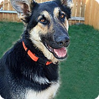 Adopt A Pet :: Riptide - Seattle, WA