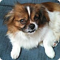 Adopt A Pet :: Guy-VA - Suffolk, VA