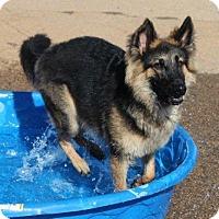 Adopt A Pet :: Sully - Dacula, GA