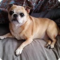 Adopt A Pet :: Honey - Rigaud, QC