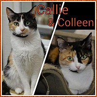 Adopt A Pet :: Callie 14218 - Atlanta, GA