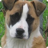 Adopt A Pet :: Erin _ ADOPTION PENDING - Albany, NY