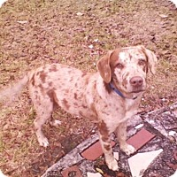 Adopt A Pet :: Winston - Rockville, MD