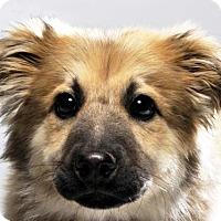 Adopt A Pet :: Wesley - Bedminster, NJ
