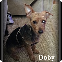 Adopt A Pet :: Doby - Indian Trail, NC