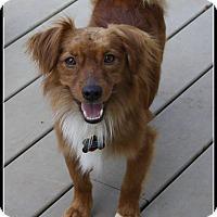 Adopt A Pet :: Bordentown NJ - Jay - New Jersey, NJ
