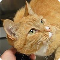 Adopt A Pet :: Canary - Sherwood, OR