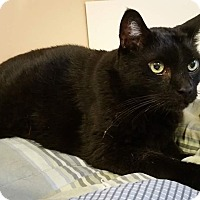 Adopt A Pet :: Bixby - New York, NY