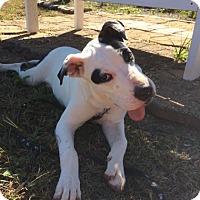 Adopt A Pet :: Quienton - Winchester, TN