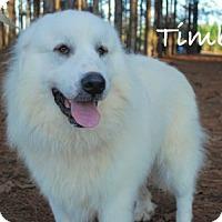 Adopt A Pet :: Timber - Minneola, FL
