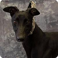 Adopt A Pet :: Forafewbucksiwil - Carol Stream, IL
