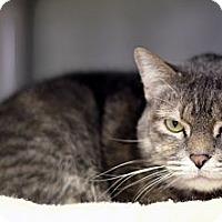 Adopt A Pet :: Frangelica Arbor - Chicago, IL