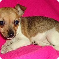 Adopt A Pet :: Minxie - Hagerstown, MD