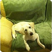 Adopt A Pet :: PIPPA - Hagerstown, MD