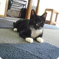 Adopt A Pet :: Tux - Mesa, AZ