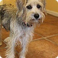Adopt A Pet :: Scrabble - Wytheville, VA