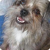 Adopt A Pet :: Sheri - Phoenix, AZ