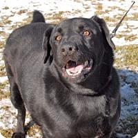 Adopt A Pet :: Elmer - Cincinnati, OH