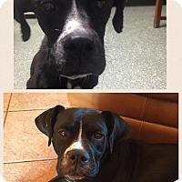 Adopt A Pet :: Eliza - Russellville, KY