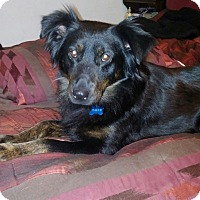 Adopt A Pet :: Mia - in Maine - kennebunkport, ME