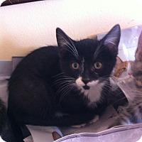 Adopt A Pet :: Parker - Toronto, ON