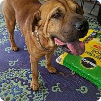 Adopt A Pet :: Bruin in FL - Mira Loma, CA
