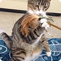 Adopt A Pet :: Murphey - Modesto, CA