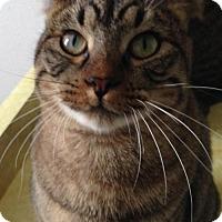 Adopt A Pet :: Chlorine - Colorado Springs, CO