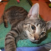 Adopt A Pet :: Dean Winchester - Oxford, NY