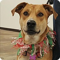 Adopt A Pet :: Betsy/Ellie - Neosho, MO
