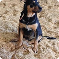 Adopt A Pet :: Jett - Perris, CA