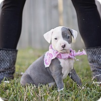 Adopt A Pet :: Rose - Houston, TX
