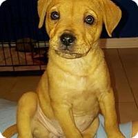 Adopt A Pet :: Cheez-it - Dayton, OH
