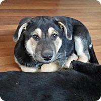 Adopt A Pet :: tilly - Saskatoon, SK