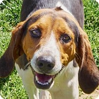 Adopt A Pet :: Arya - Lincolnton, NC