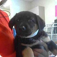 Adopt A Pet :: A270511 - Conroe, TX