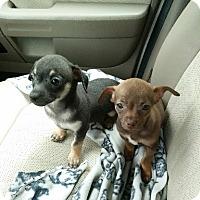 Adopt A Pet :: Dottie - Aurora, CO