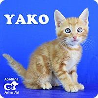 Adopt A Pet :: Yako - Carencro, LA