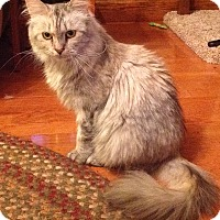 Adopt A Pet :: Anastasia - Lincoln, NE