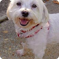 Adopt A Pet :: Buddy - Rockville, MD
