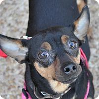 Adopt A Pet :: Rachel - Atlanta, GA