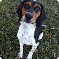 Adopt A Pet :: SNOOP DOG - LAFAYETTE, LA