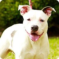 Adopt A Pet :: Bruno - Austin, TX
