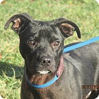 Adopt A Pet :: Slick - Germantown, MD