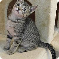 Adopt A Pet :: Tony - Elkhorn, WI